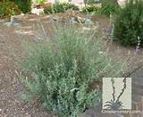 2011 Civano Nursery, Inc. 5301 S. Houghton Road Tucson, AZ 85747 ...