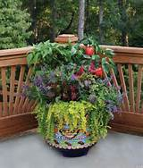 Container Gardening With a Tasty Twist - Mix Fruits and Vegetables ...