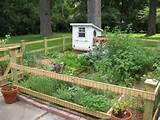 Story of a Beginning Gardener