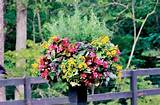 easy container garden ideas