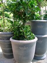Unique Outdoor Garden Décor and Botanical Gifts