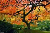photo portland japanese garden autumn jpg
