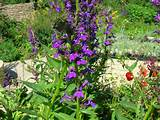 Brighten up your garden with our cottage garden plants; delphiniums ...