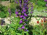 brighten up your garden with our cottage garden plants delphiniums