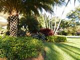 tropical landscape designs tropical landscape