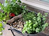 miniature gardening with herbs