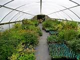 nursery landscape nursery garden center landscape nursery supplies
