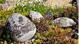 simple rock garden decoration ideas