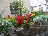Garden+flowers+++Sticklepath+++1024x768