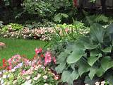 -garden-design-ideas-shade-garden-ideas-pinterest-shade-garden-ideas ...