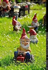 Garden gnomes, garden gnome driving a tractor on a lawn, Bueches near ...