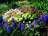 GARDEN PLANTS: FLOWERING