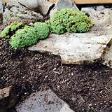 Succulent + Rock Garden Ideas