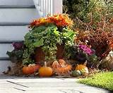 Fall Punkins and Gourds