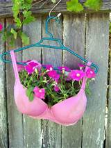 this bra planter takes the prize for being the most unusual planter i