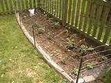 vegetable garden fence ideas - but the wire fence we put up goes along ...