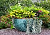 gardening ideas for flowers garden container ideas potted plant
