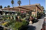 Armstrong Garden Centers, Santa Monica