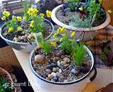 DIY Fairy Garden Container - DIY Garden