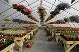 New garden center & market opens in Brant Lake