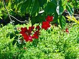 gardening bright red flowers