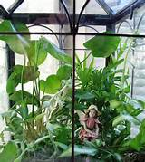 indoor fairy gardens you can add as much as you like more fairies more