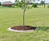decorative_concrete_border_tree-circles-classic-mower-Springfield ...