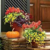 Fall porch flowers | Nature, Outdoors, Gardens | Pinterest