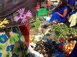 Gaining ground: Senegalese agriculture relocalises - Sustainable Food ...