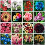 16 Varieties Flower Seeds Enjoy All Year Long Blooming DIY Garden ...