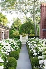 fact, can you imagine a whole garden devoted to this look? Hydrangeas ...