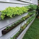 vertical garden2
