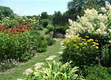 My Dream Perennial Garden?