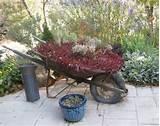 About Flea Market Gardening | Flea Market Gardening