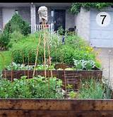 My Edible Front Garden. And How I Came Out As A Front Yard Veg Grower ...