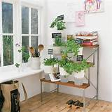 Day Gift Idea - How to create a mini indoor vegetable and herb garden ...