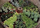 herb wheel | gardening ideas | Pinterest