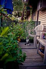 Turn your patio or balcony into a vegetable garden. » Curbly | DIY ...