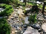 water garden is not the same as a rain garden this disney garden