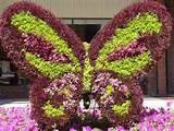 floral butterfly garden ideas pinterest