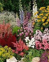 perennials garden perennial perennial garden perennial plant flowers