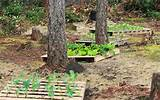 Up-cycled Wood Pallet Garden | Pallets Furniture Designs