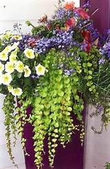 Container Garden ideas | container gardening | Pinterest