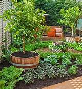 Interesting potager design | Potager - the Kitchen Garden | Pinterest