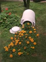 "Rose Garden Ideas, Prairie Rose's Garden: ""Thelma and Louise ..."