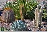 desert landscaping features a variety of different types of cactus