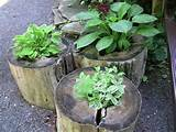 Log planters | Garden Ideas | Pinterest