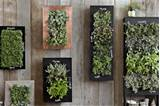 Buy or DIY wall planters decorated with black chalkboard paint