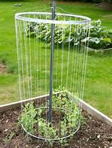 Pea Trellis Idea | Garden | Pinterest