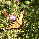 Butterfly | garden ideas | Pinterest
